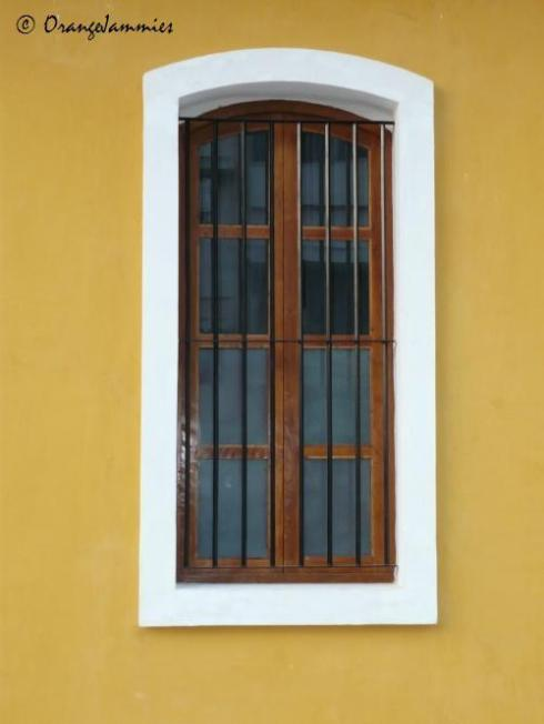 mango window_cp
