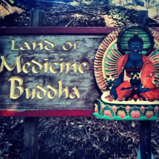 Credits: Instagram on my Google Nexus phone and the beautiful Land of Medicine Buddha